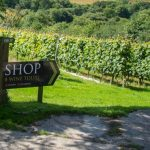 Image Credit: Camel Valley