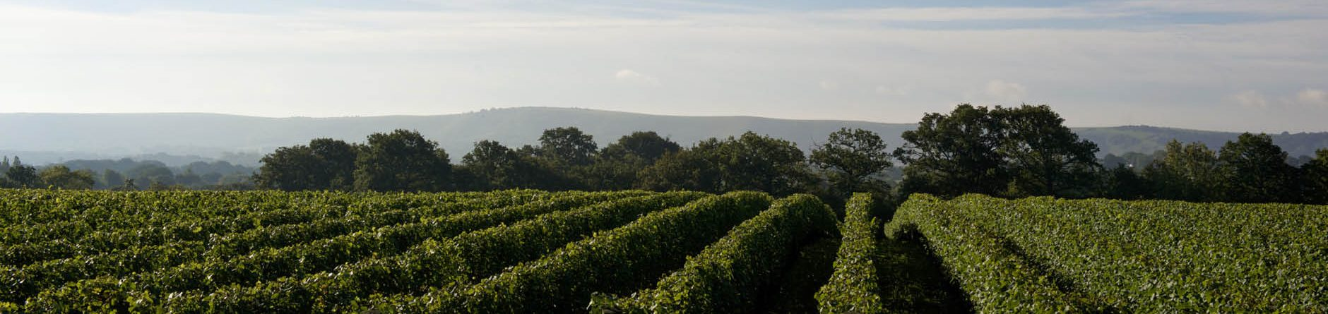Ridgeview Wine Estate, Sussex