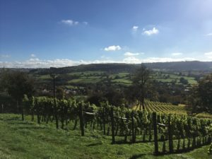 Woodchester Valley