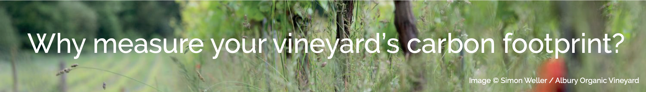 Why Measure the Carbon Footprint of Vineyards?